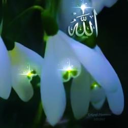 kaligrafi-allah-dan-bunga-putih_Rita al-khansa