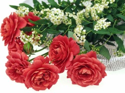 Bunga Romantis Mawar Merah (mentafakuri anak kecil Rita Al-Khansa)
